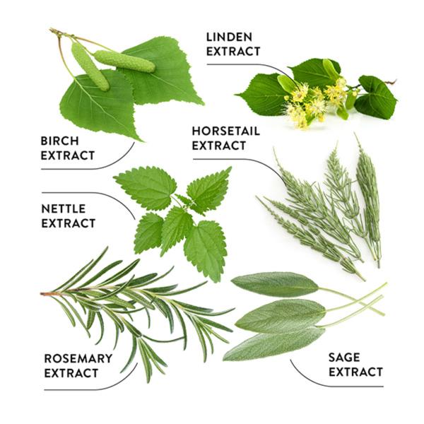 خمیردندان حفاظتی و 7 گیاه اکودنتا
